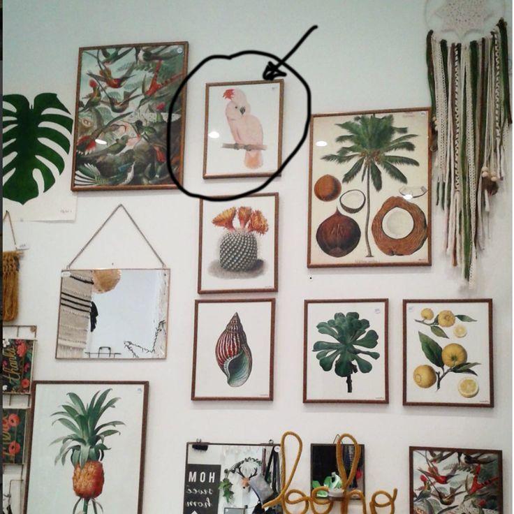 Affiche perroquet carpe diem décor à toulouse adresse 18 rue dastor 31000