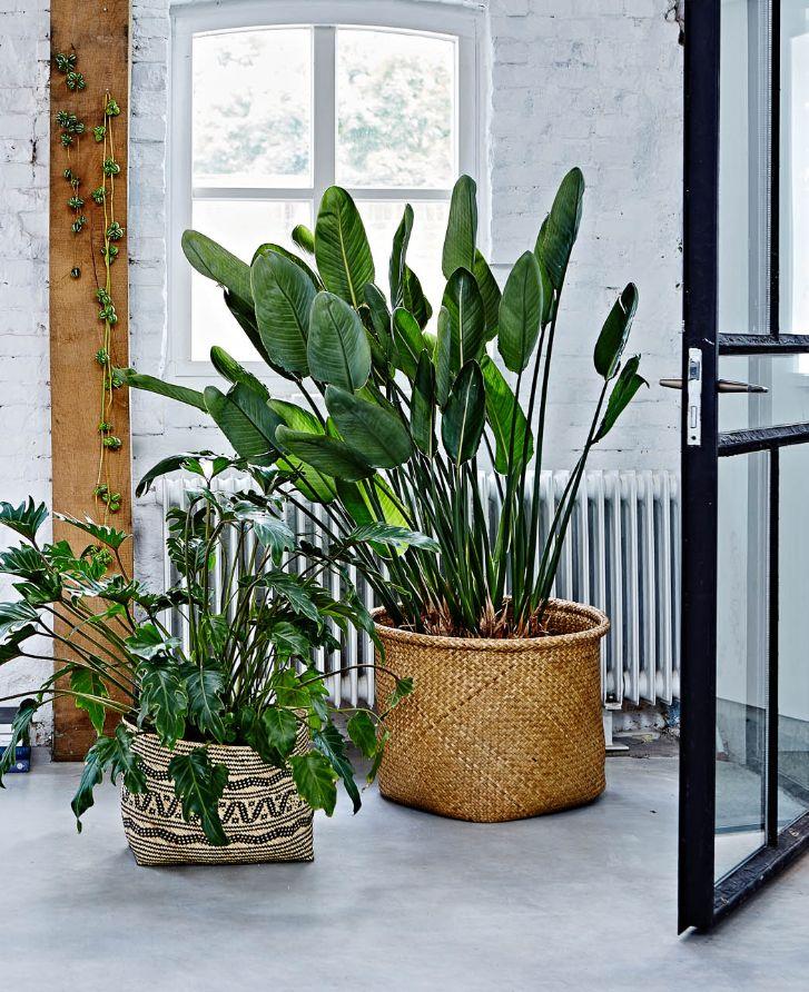Ook in een industrieel interieur mag groen niet ontbreken