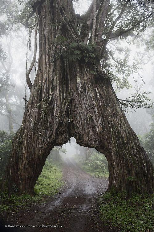 Arusha National Park, Tanzania. En viajarsolo seguimos buscando árboles impresionantes.