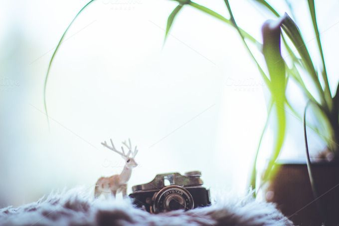 Deer with a camera by Farkas B. Szabina on Creative Market