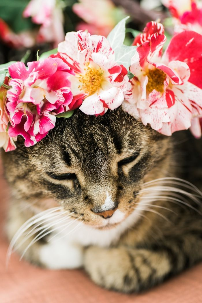 DIY Rose Flower Crown