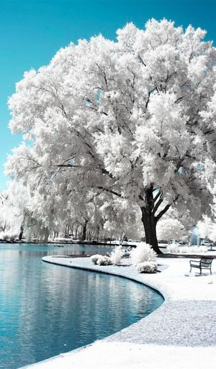 White wonderland at Freedom Park in Charlotte, North Carolina • infrared photo: Chris Summerville on Flickr