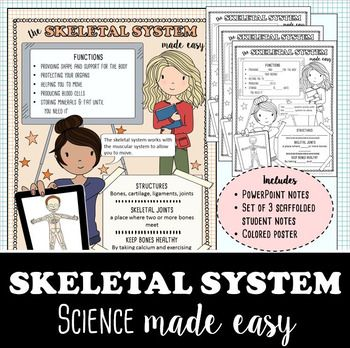 how to learn the skeletal system