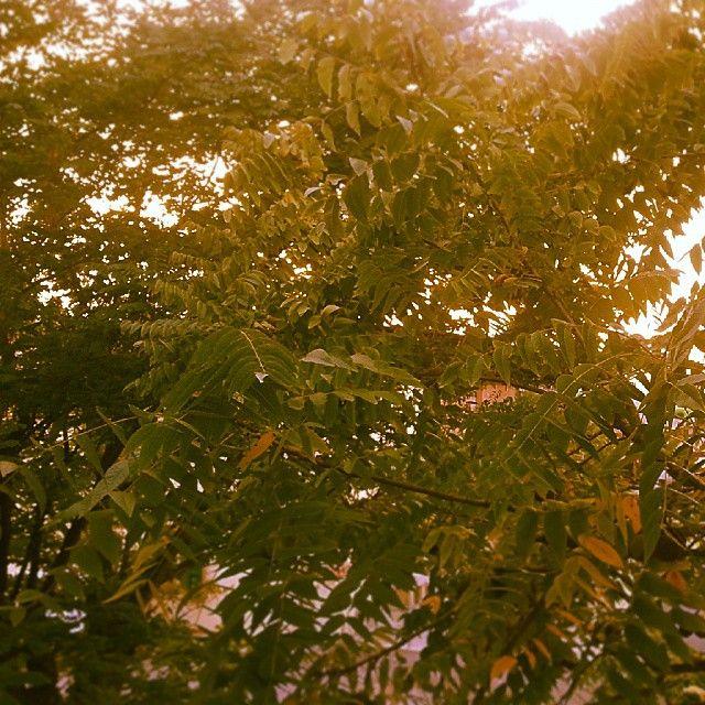 #autumn #fall #leaves