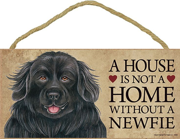 Newfoundland-Indoor-Dog-Breed-Sign-Plaque-A-House-Is-Not-A-Home-181044600652