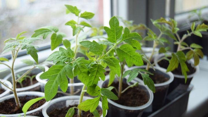 How to grow your own seedlings