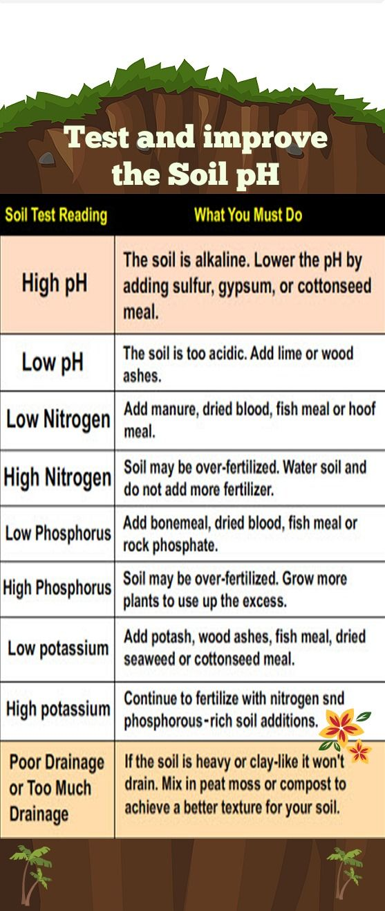 How to Test and improve the Soil pH in your Garden