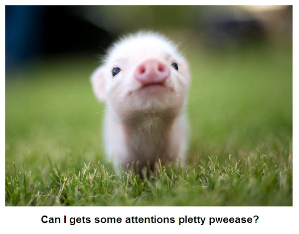Pweeease?: Piglets, Little Pigs, Teas Cups, Minis Pigs, Baby Pigs, Piggy, Teacups Pigs, Pet Pigs, Animal