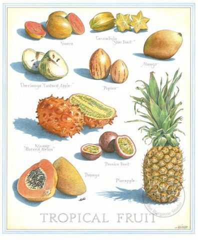 Fruits and Vegetables - John Burgoyne Studio