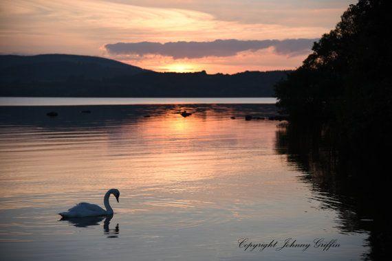 Swan enjoying Sunset swim on Lough Derg by EmeraldIslePrintShop