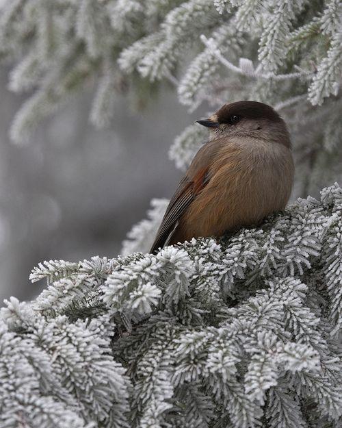 17 meilleures id es propos de branche d 39 oiseaux sur for Pochoir oiseau