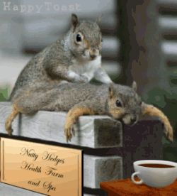 I couldn't find a picture of a massaging pad...So I found a picture of massaging squirrels to represent it. :)