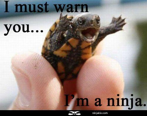 I must warn you, I'm a Ninja!: Laughing, Ninjas Turtles, So Cute, Funny Stuff, Humor, Things, Funny Animal, Smile, Baby Turtles
