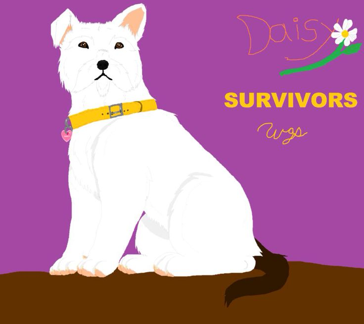 17 Best Images About Survivors By Erin Hunter On Pinterest