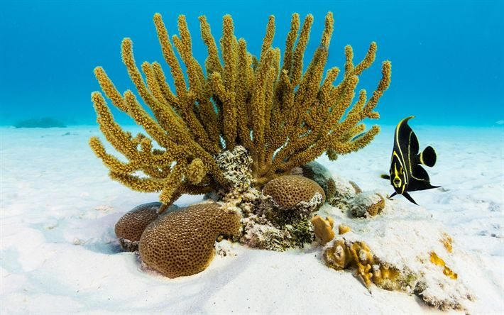 Download wallpapers corals, sand, underwater world, ocean, fish, tropical island