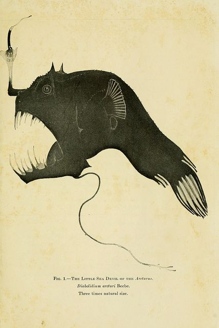 The little sea devil of the Arcturus. The Arcturus adventure, New York, Putnam,1926