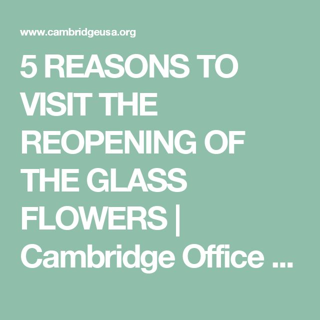 5 REASONS TO VISIT THE REOPENING OF THE GLASS FLOWERS | Cambridge Office of Tourism
