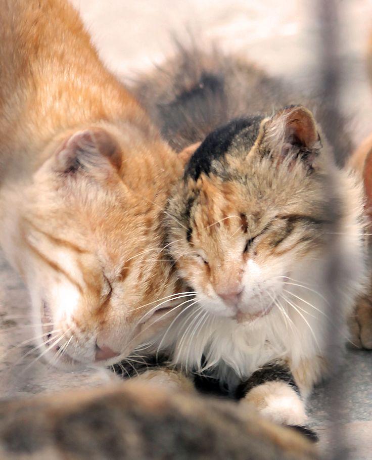Cats in Tilos - www.robertozedda.it