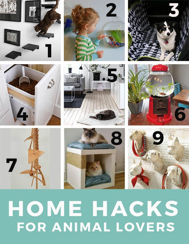 9 Pet Friendly Design Ideas And Home Hacks