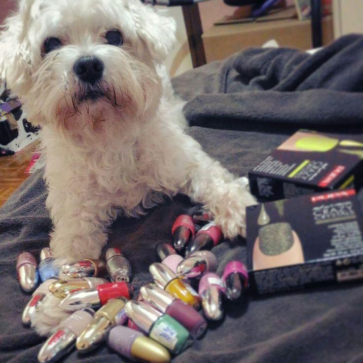 ******_ #casper #puppy #maltese #amoreconlaAmaiuscola #amateglianimali #amore #puppy #dog #love #instadog #instalife #like #dolcezzainfinita #polliceinsù #selfiedog #espressività #tuttolamorechecè #fido #friend #heart #life #bau #ilmiomondoèilsuocuoricino #instagram #instapuppy #nailpolish #nails #beauty #amoreincondizionatoperte #bestfriend