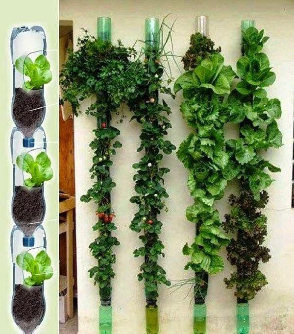 ¿Te gustaría tener tu propio huerto de verduras y especias pero vives en departamento? No te deprimas, todo es posible. Si tienes balcón estás requete salvada. Es cosa de utilizar bien el espacio y listo, podrás tener una mini huerta en tu terraza y cocinar con tus hierbas recién cosechadas. Si tu departamento es …
