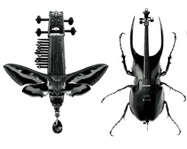 Insect Instruments for ParisTexas - Black metamorphosis art ParisTexas PARISTEXAS by Scandinavian DesignLab