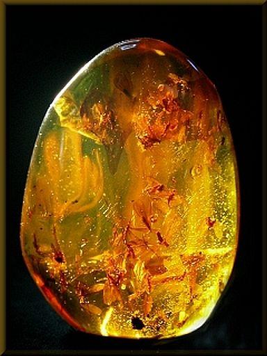 Amber with insect inclusions ≤≥≤≥≤≥≤≥≤≥≤≥≤≥≤≥≤≥≤≥≤≥≤≥≤≥≤≥ ♥ Gaby Féerie créateur de bijoux à thèmes en modèle unique. Des pièces originales à ne pas manquer ♥ Présente.sur.pinterest.➜ https://fr.pinterest.com/JeanfbJf/pin-index-bijoux-de-gaby-f%C3%A9erie/ et.sa.boutique.➜ http://www.alittlemarket.com/boutique/gaby_feerie-132444.html