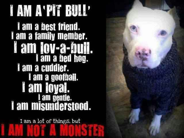 Love my pitties