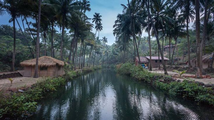 Lovely, moody shot of the waterways through the jungle by Khola beach in south Goa.