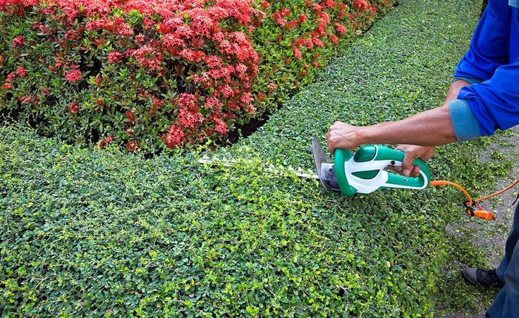Dana pacific Landscape specializes in tree trimming service and tree Removal service in Dana point, CA.