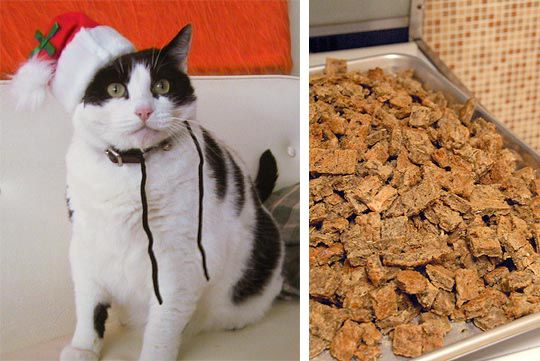 Organic Homemade Cat and Dog Treats. Make extras and take them to your local shelters. =)