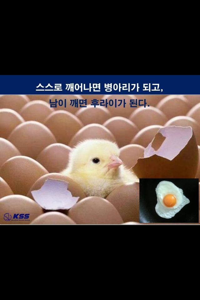 <KSS 김세우의 1분특강> If egg is broken by outside force, life ends.    If broken by inside force, life begins.    Great things always begin from inside.  - -Knowhow Success System-