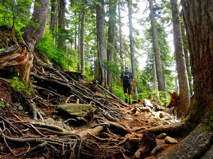 St Marks Summit trail - root trail in Cypress Provincial Park, Vancouver