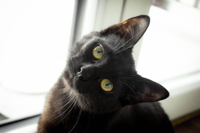 Hey coucou cute kitten cat black animal pet chat