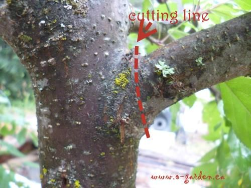 Spectacular Tree Pruning Techniques for productive fruit trees