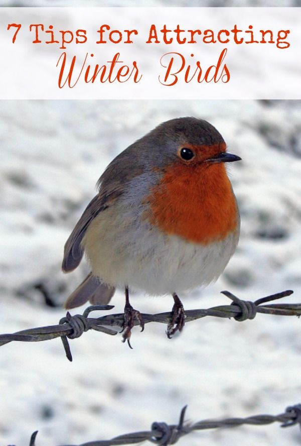 How to attract winter birds.