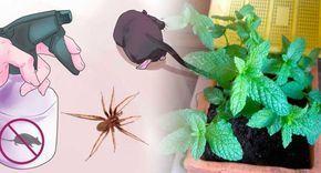 repelente-de-ratones-y-arañas