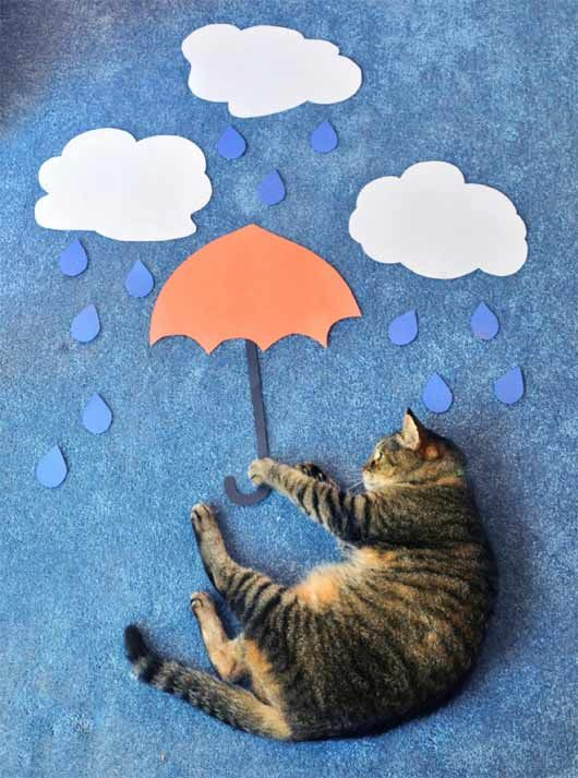 The Science of (Cat) Sleep by Theresea Knudson.: Cat Art, Cat Photography, Pet Photography, Mary Poppins, Umbrellas, Rainy Day, Catart, Photo Shoots, Baby Cat