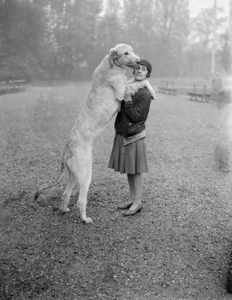a nine-month-old Irish wolfhound with his owner E P Orpen at a Kennel Club show at Crystal Palace, Sydenham, London