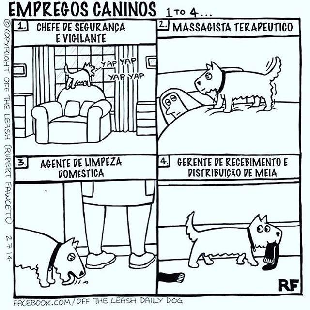 ❤ #petmeupet #cachorro #filhode4patas #cachorroetudodebom #caopanheiro #maedecachorro #paidecachorro #pug #maltes #shihtzu #schnauzer #labrador #goldenretriever #bulldogfrances #viralata #luludapomerania #amoanimais #amocachorro