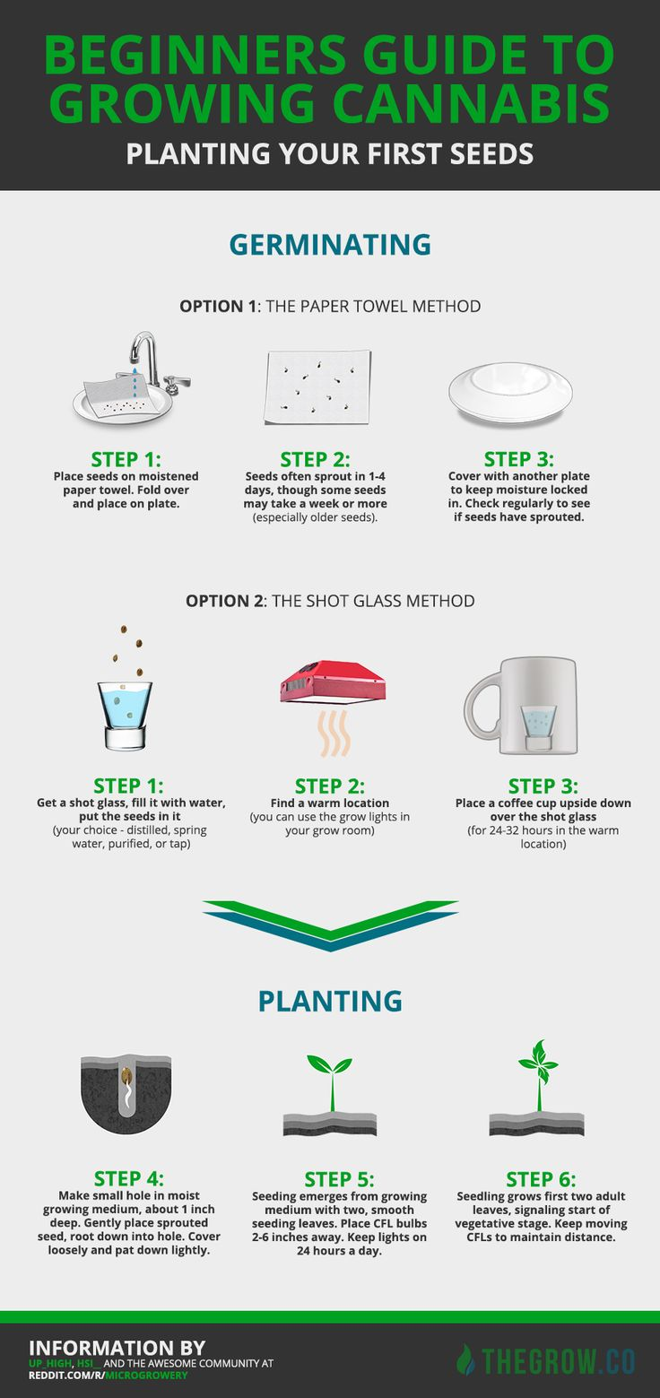 25 Best Ideas About Cannabis Cultivation On Pinterest Growing Weed Growing Marijuana Indoor