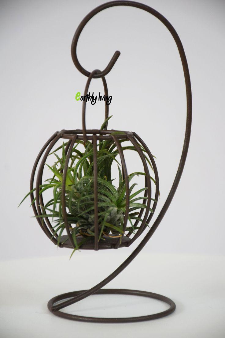60 best Air plants holders Terrarium Planters images on Pinterest ...