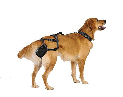 PABS For Pets System The Ultimate Chastity Belt For Dogs 2XLarge PABS with 4 SaniT Pads >>> Want additional info? Click on the image.