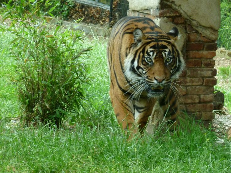 This photo was taken at Chessington Zoo