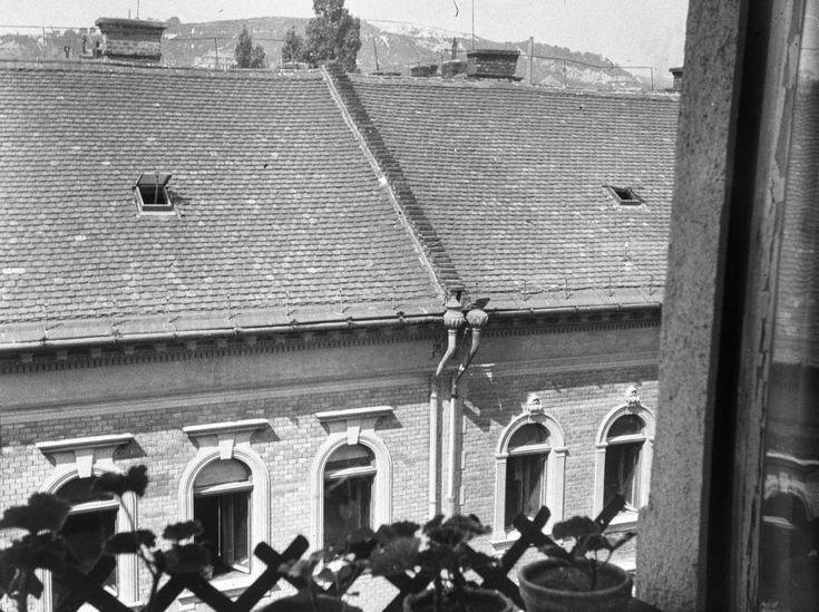 kilátás a Hajnóczy József utca 1-ből a Kis-Sváb-hegy felé.