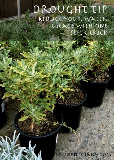 Greener plants