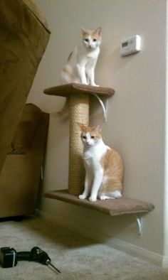wall mounted cat bed | DIY Wall Mounted Cat Tree - Imgur