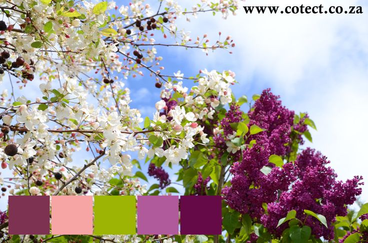 Hang in there spring is just around the corner. In the meantime you can take some #Colour inspiration from it when choosing your #paint.