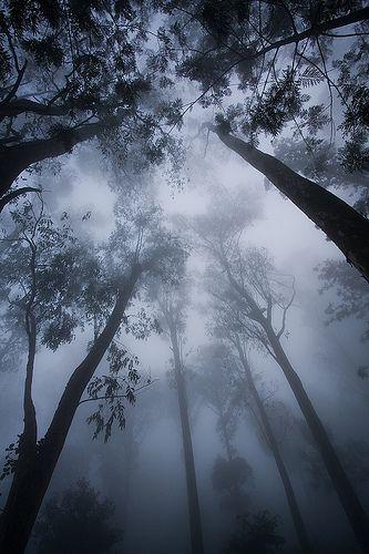 Morning Fog, Nandi Hills, Karnataka by Raj Hanchanahal
