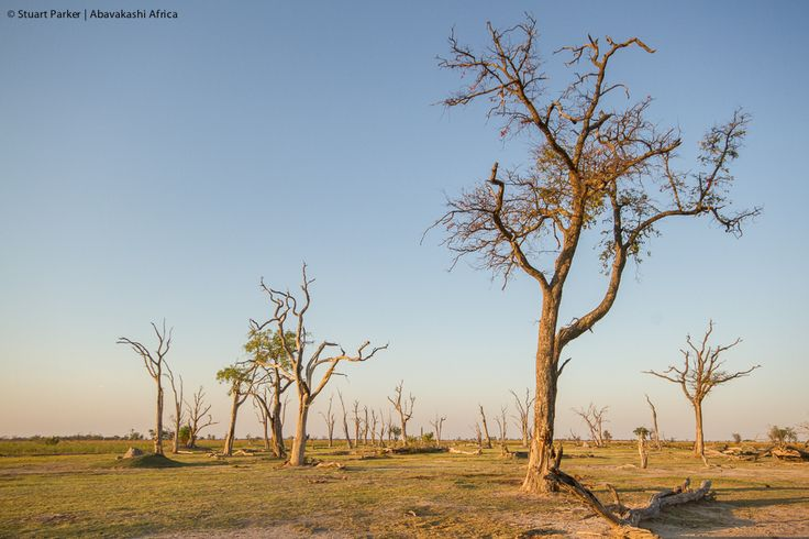 Moremi Game Reserve sunset landscape in Botswana